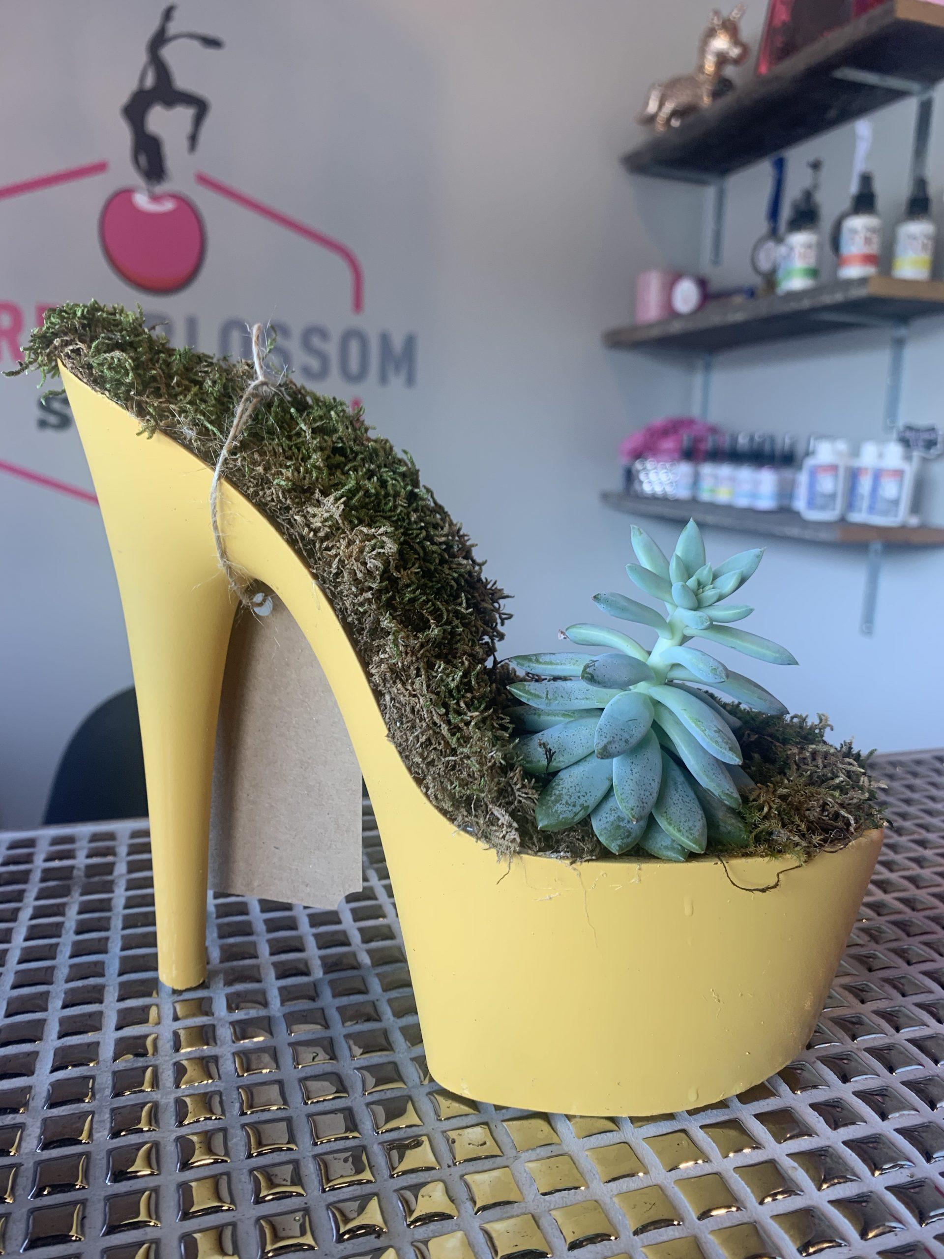 Yellow Succulent Pleaser